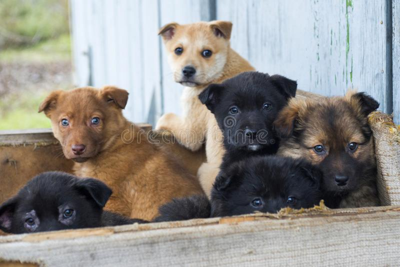 一起无家可归的小狗 社会问题 免版税图库摄影