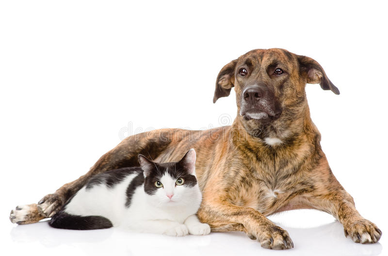 小色狗和猫交配_一起混杂的品种狗和猫 背景查出的白色
