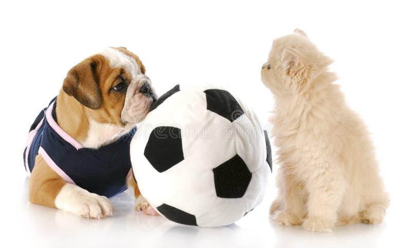 一起演奏小狗的小猫 免版税库存图片