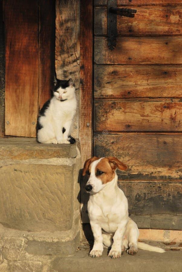 一起猫狗 免版税库存图片