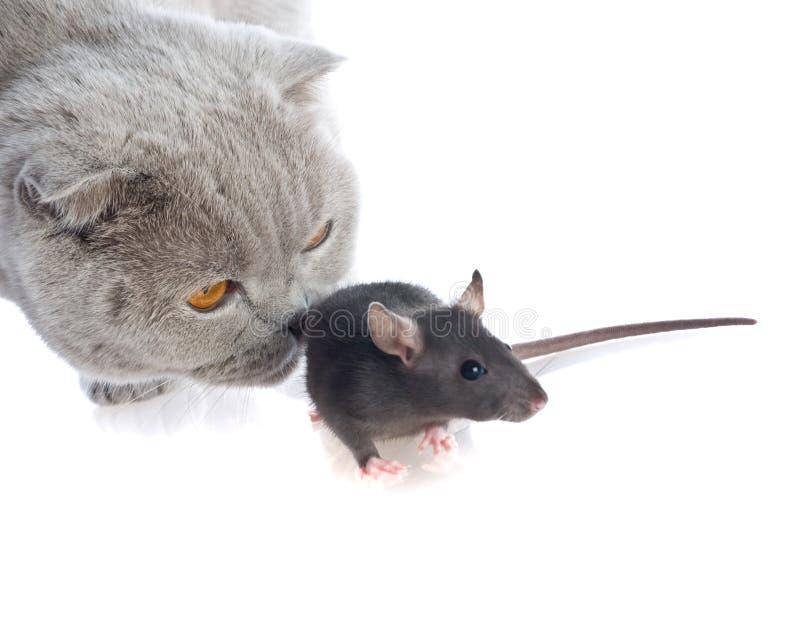 一起猫鼠标 免版税库存图片