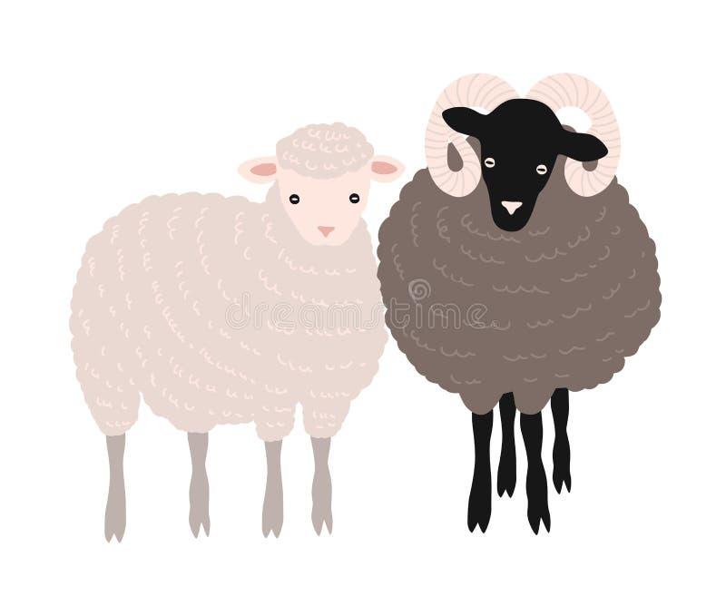 一起站立对的绵羊和的公羊 可爱的仓库广场在白色隔绝的国内反刍动物或农场牲畜 皇族释放例证