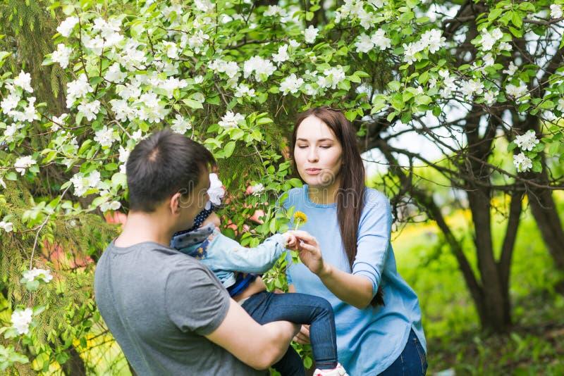 一起花费时间的家庭在春天的公园 使用在开花的庭院里的母亲、小孩和父亲 免版税库存照片