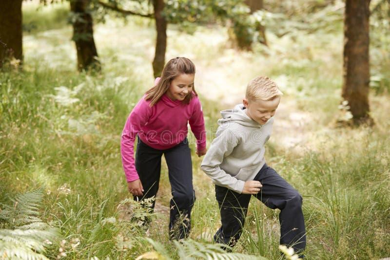 一起走在绿叶,四分之三长度,侧视图中的一个森林里的两个孩子 免版税库存照片