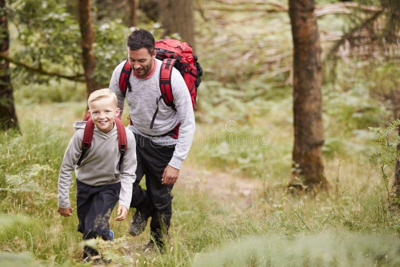 一起走在足迹的男孩和他的父亲在树之间在森林,高的看法里 图库摄影