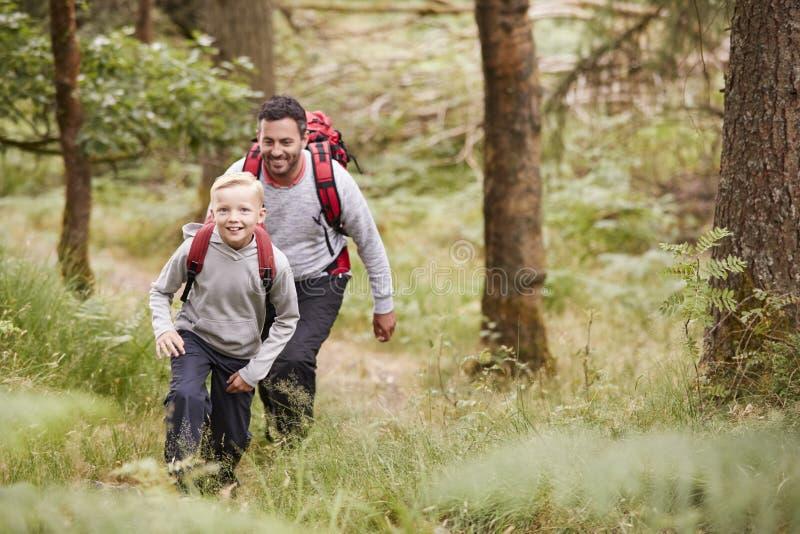 一起走在足迹的男孩和他的父亲在树在森林里,微笑的两个,高的看法之间 免版税图库摄影