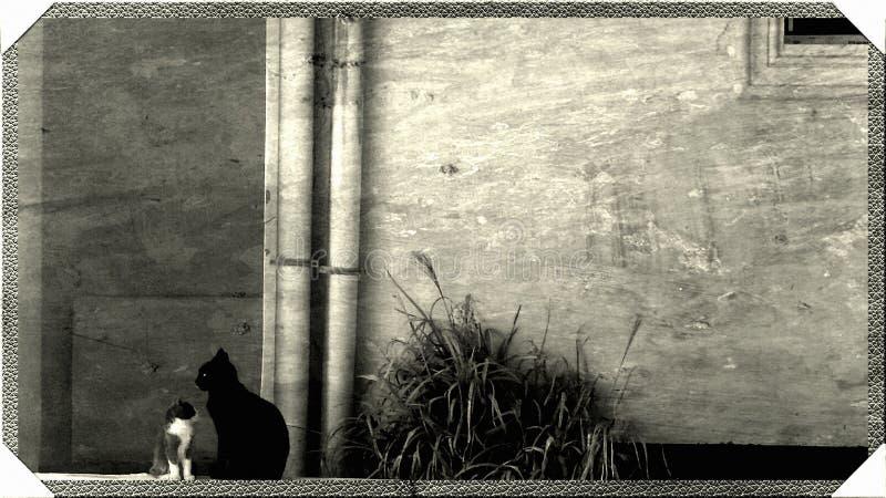 一起逗人喜爱的小猫和大猫 免版税库存图片