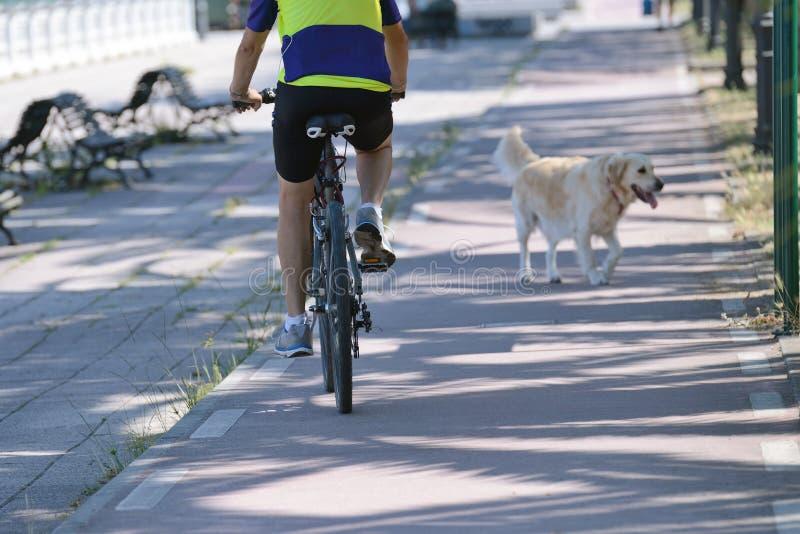 一辆自行车的人有一条狗的在公园 免版税图库摄影