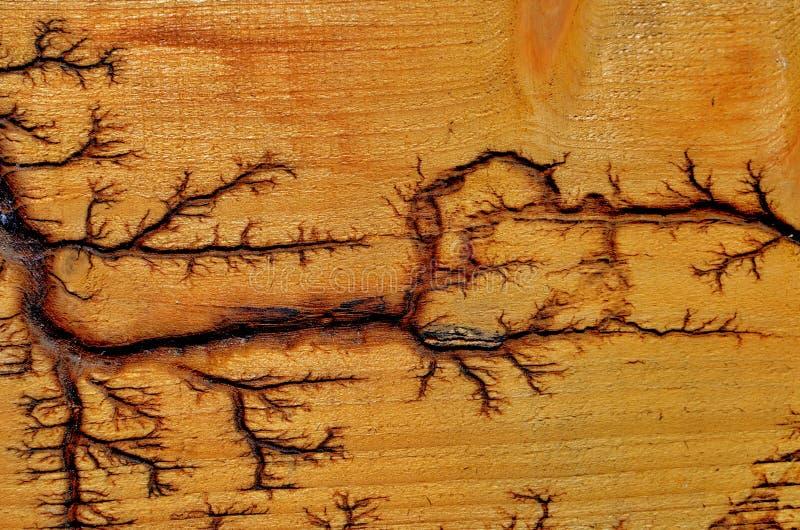 一道闪电的人为图画在树的 免版税库存图片