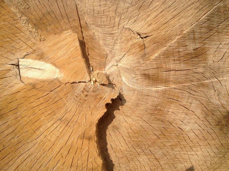 一部分的一个被锯的树干 免版税库存图片