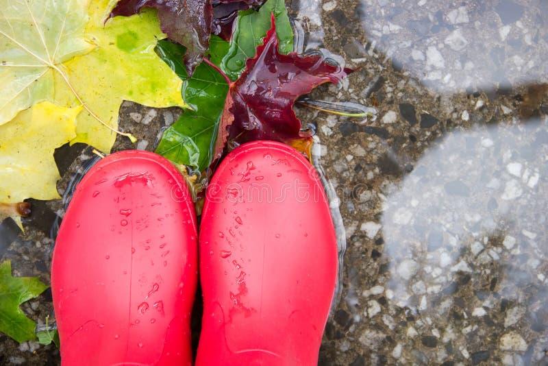 一部分的在红色胶靴的腿在与叶子的一个水坑在 图库摄影