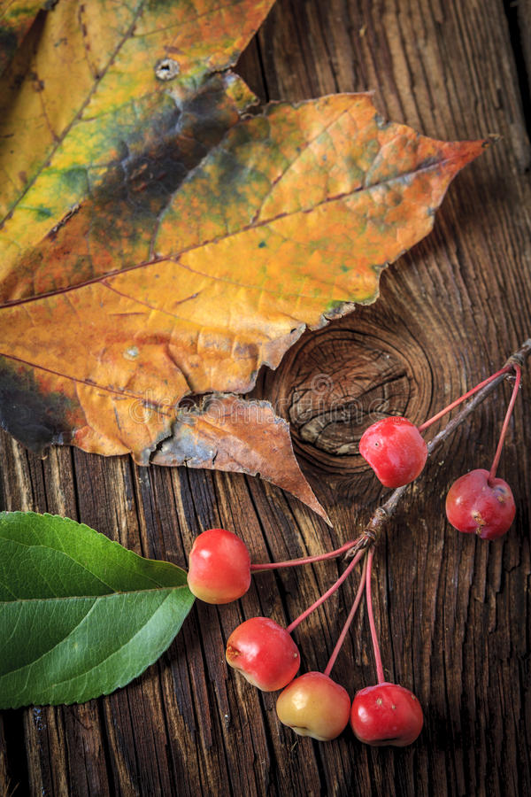 一部分的枫叶和crabapples 免版税库存图片