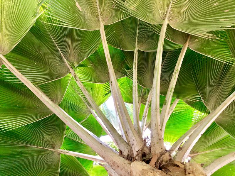一部分的棕榈树 库存照片