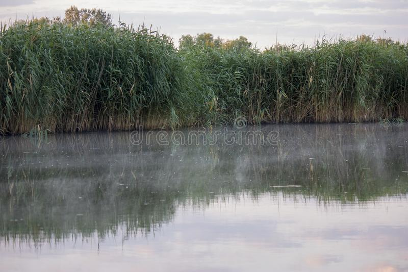 一部分的湖用水和干燥芦苇和草在岸附近 清早与在水的雾 自然狂放 免版税库存照片