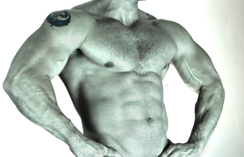 一部分的美丽的男性躯干。 侧视图 库存照片