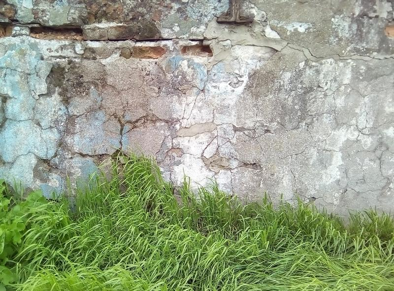 一部分的老轻的涂灰泥的墙壁和绿草 免版税库存图片