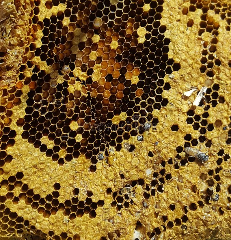 一间老蜂房 库存图片