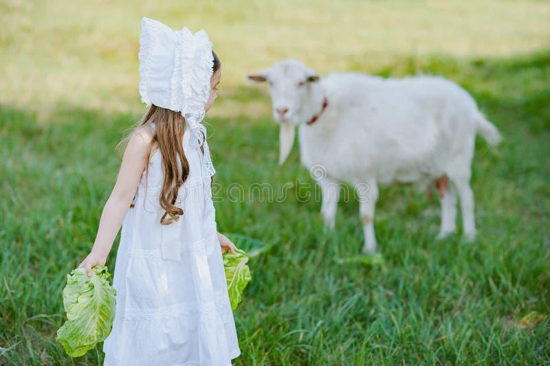 一顶白色礼服和帽子的一个牧羊人女孩喂养与圆白菜叶子的一只山羊 在春天领域的喂小孩山羊 免版税库存照片