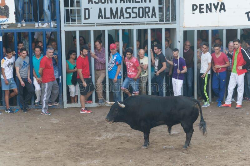 一头公牛的图象在街道上的 图库摄影