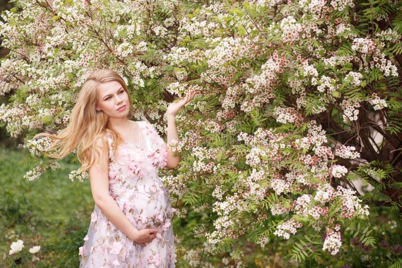 一件轻轻地桃红色礼服的美丽的孕妇接触她的腹部,并且另一只手接触开花的树 免版税库存照片
