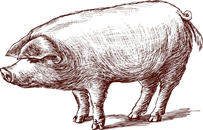 猪 皇族释放例证