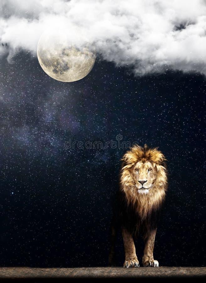 一头美丽的狮子的画象,在繁星之夜月亮的狮子 免版税库存图片