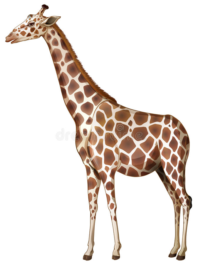 一头长颈鹿 向量例证