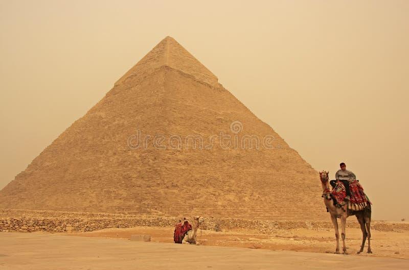 一头骆驼的流浪者在Khafre附近,开罗金字塔在沙子strom的 库存图片