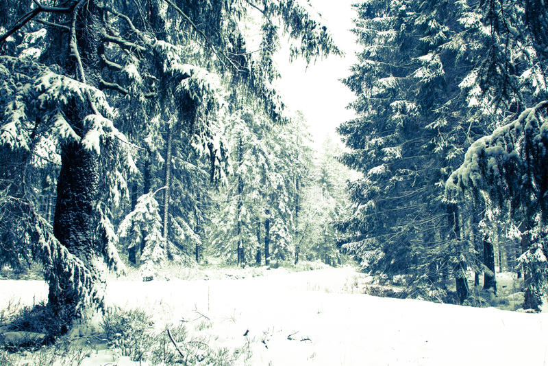 一sneefall在森林里 免版税库存照片