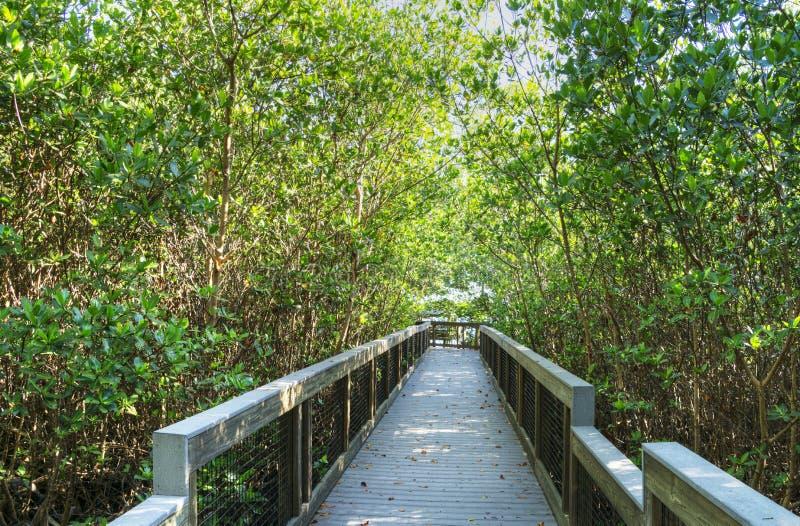 丁亲爱的自然保护区的木板走道 库存照片