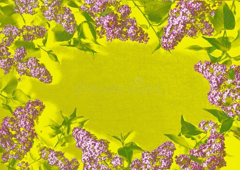 丁香分支在黄色背景的 库存图片