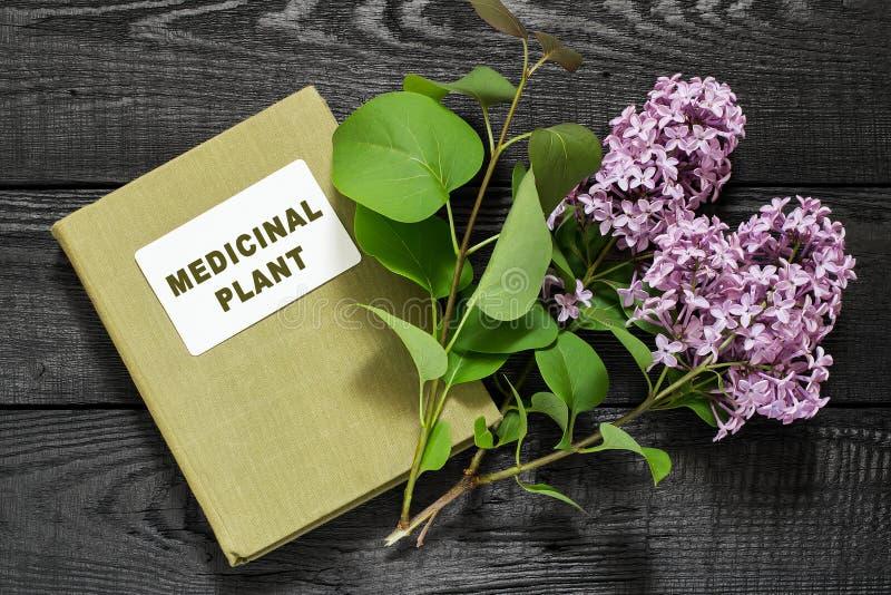 丁香和目录药用植物 图库摄影