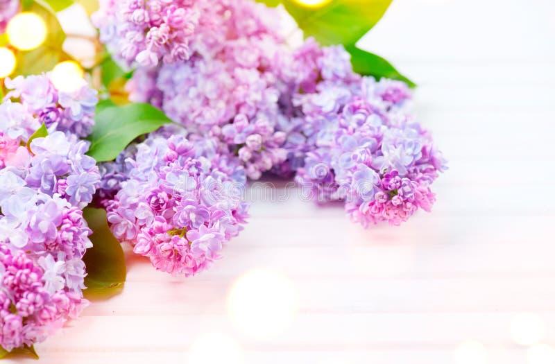 丁香开花在白色木背景的束 库存图片