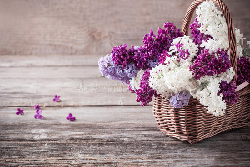 Download 丁香开花的分支 库存照片. 图片 包括有 花卉, 言情, 减速火箭, 艺术, 粉红色, 概念, 叶子, 构成 - 62530902