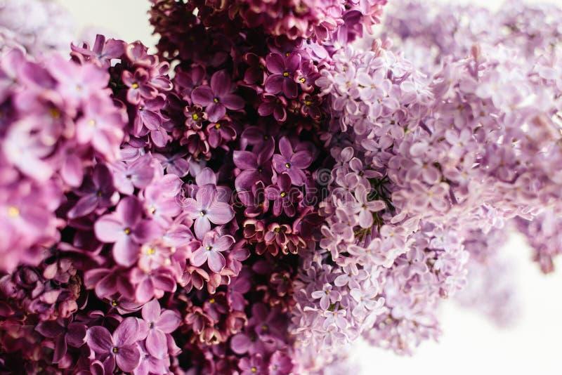 丁香花卉纹理在白色背景的 库存照片