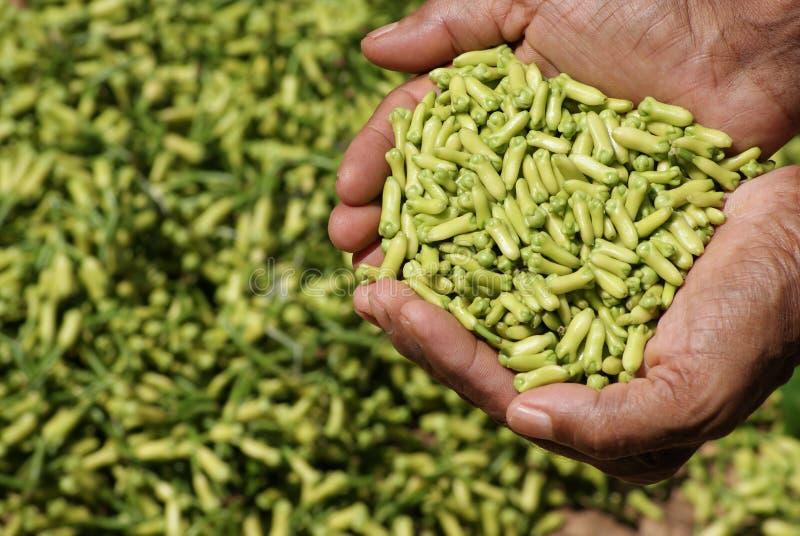 丁香-一世界的最健康的食物 库存照片