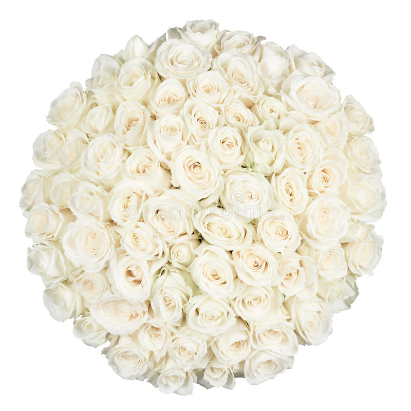 七十一玫瑰 免版税库存图片