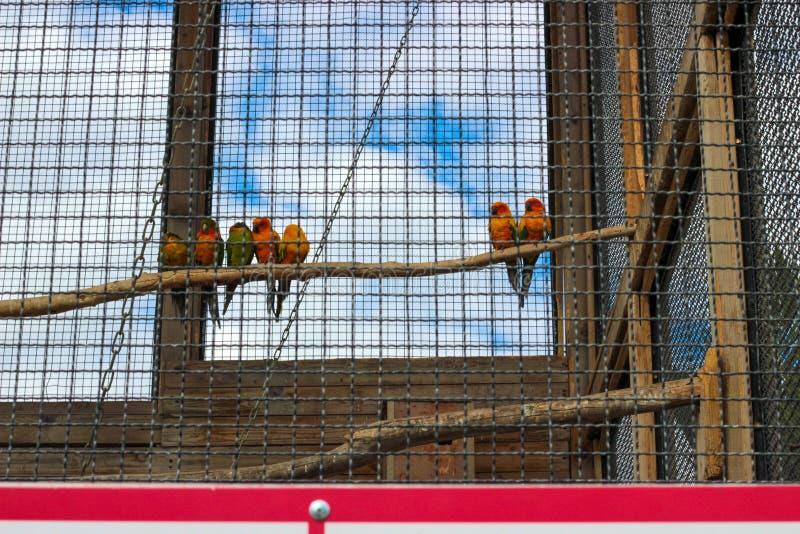七只五颜六色的鹦鹉坐分支 库存照片