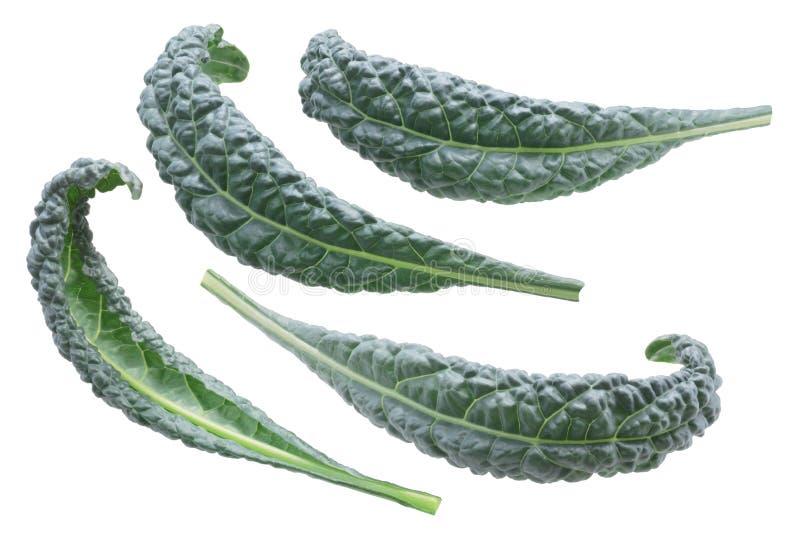 七高八低的叶子圆白菜无头甘蓝黑色托斯卡纳 免版税图库摄影