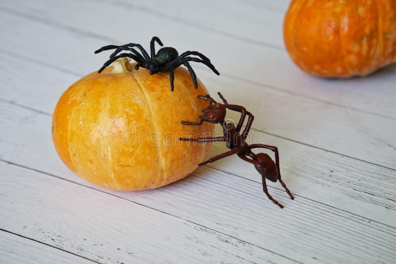 万圣夜和奇怪的昆虫的南瓜 玩具蚂蚁和蜘蛛分类 免版税库存图片