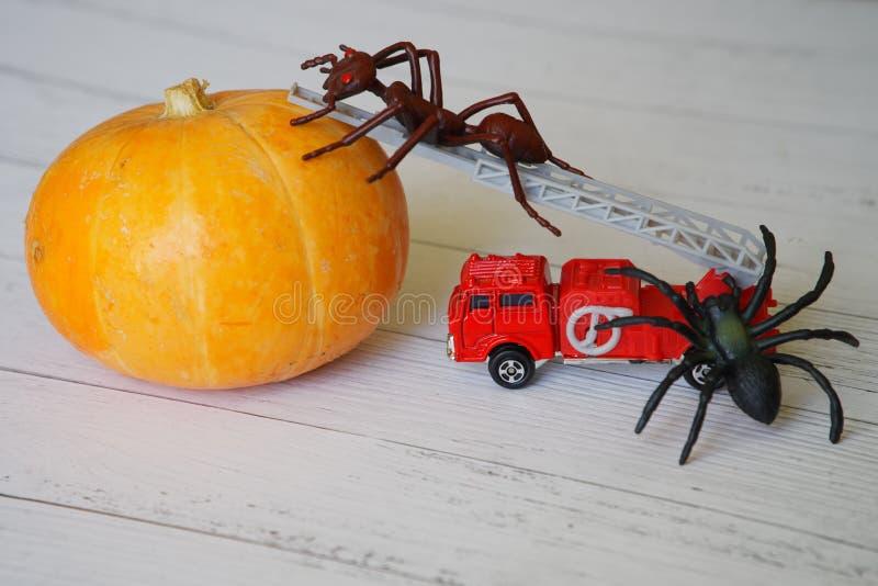 万圣夜和奇怪的昆虫的南瓜 玩具蚂蚁和蜘蛛 图库摄影