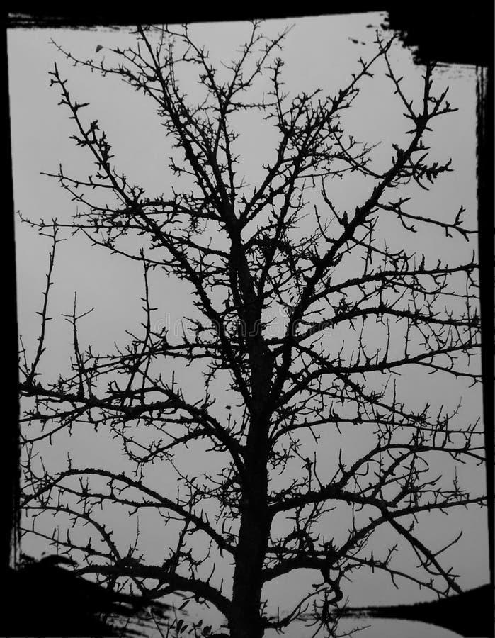 万圣夜树 免版税库存图片