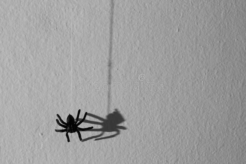 万圣夜背景概念 黑蜘蛛图表阴影hangin 库存照片