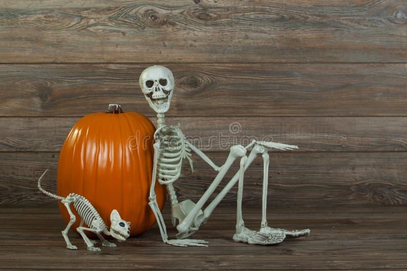 万圣夜骨骼和猫骨骼用南瓜 免版税库存图片