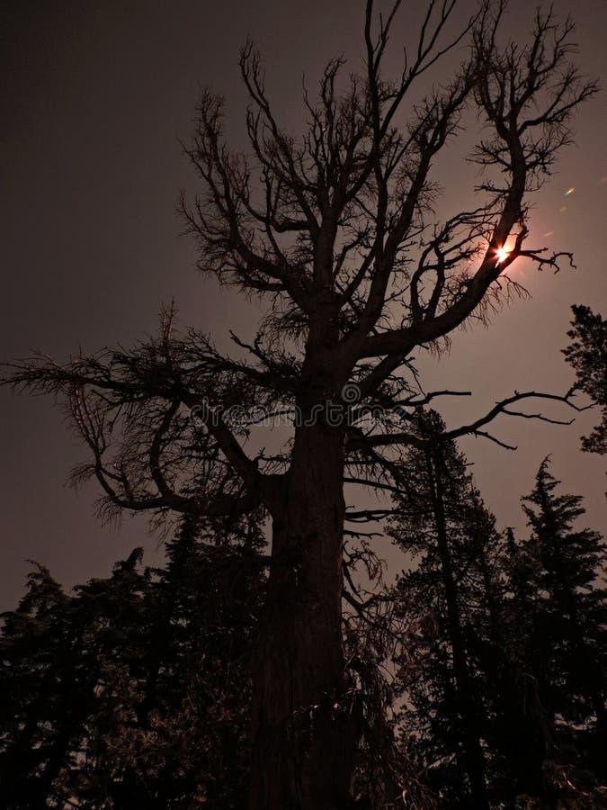 万圣节一棵树长大 免版税库存图片