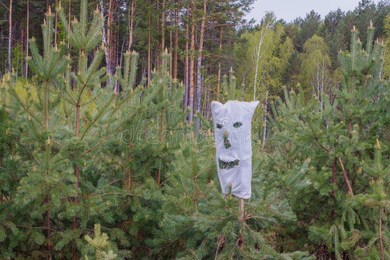 万圣节在西伯利亚 与裂缝的袋子眼睛的,鼻子和嘴,佩带在一棵年轻杉木 库存图片