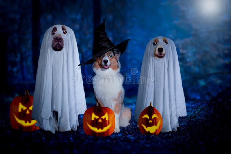 万圣节,三条狗坐假装作为鬼魂和巫婆前面的 免版税图库摄影