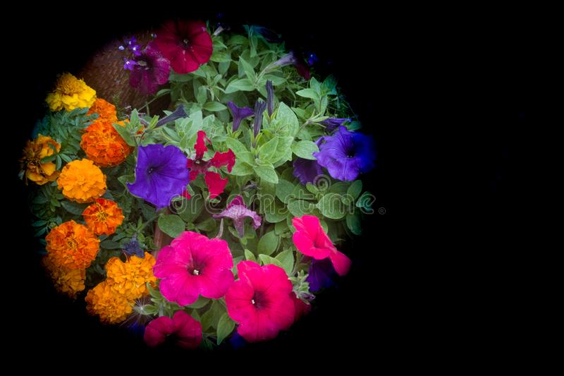万寿菊和喇叭花充满活力的夏天卧具  库存照片