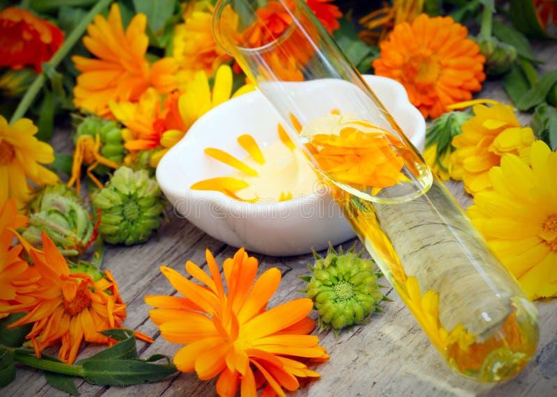 从万寿菊的自然化妆用品 免版税库存照片