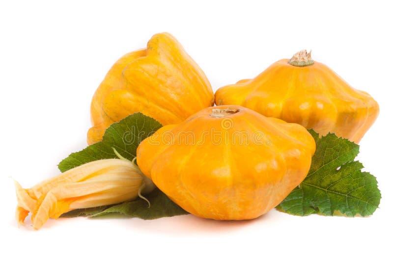三与在白色背景和花的黄色pattypan南瓜隔绝的叶子 库存照片